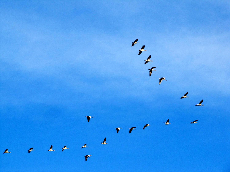 Vogeltrek in beeld