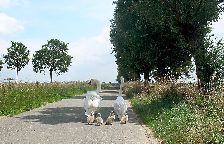 Prinsenbeeks poldergebied