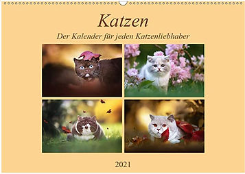Katzen1.JPG