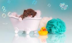 Onida - Kitten in Badewanne