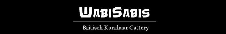 Wabisabis Britisch Kurzhaar Cattery, BKH, Berlin, Zucht, Züchter,