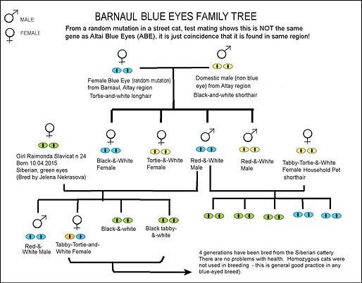 altai-genealogy.jpg