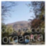 22 organización orgánica.jpg