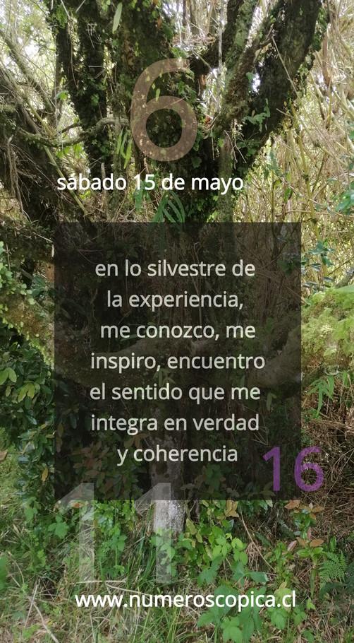 sábado 15 de mayo