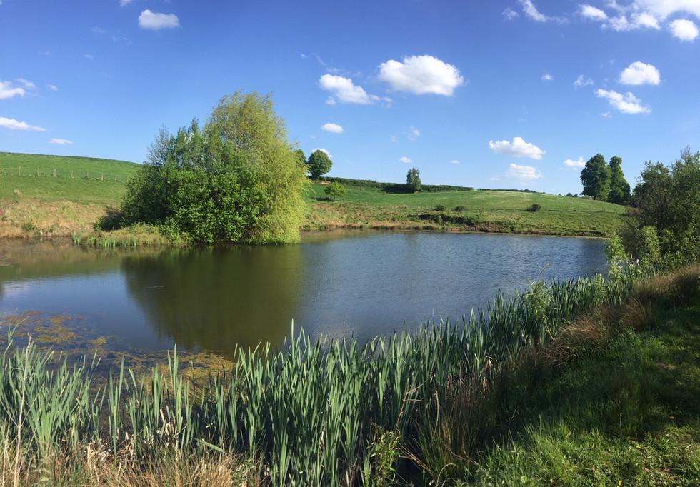 A Hendre large pond.JPG