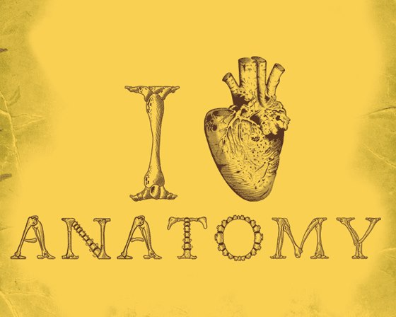 anatomy loving