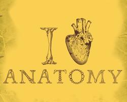 anatomy loving