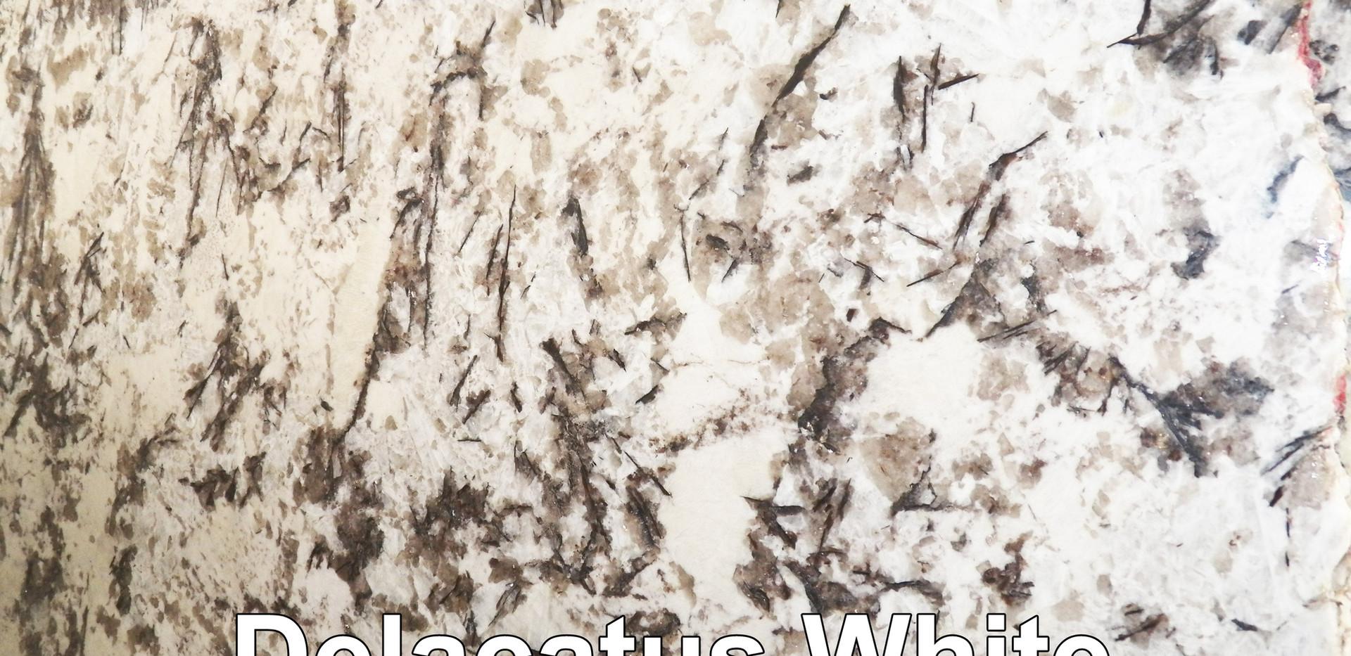 Delacatus White.jpg