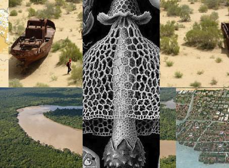 Memoria 2. Pensamiento tentacular y Artes de vivir en un planeta dañado [...] Donna Haraway
