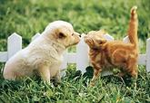 犬猫①.png