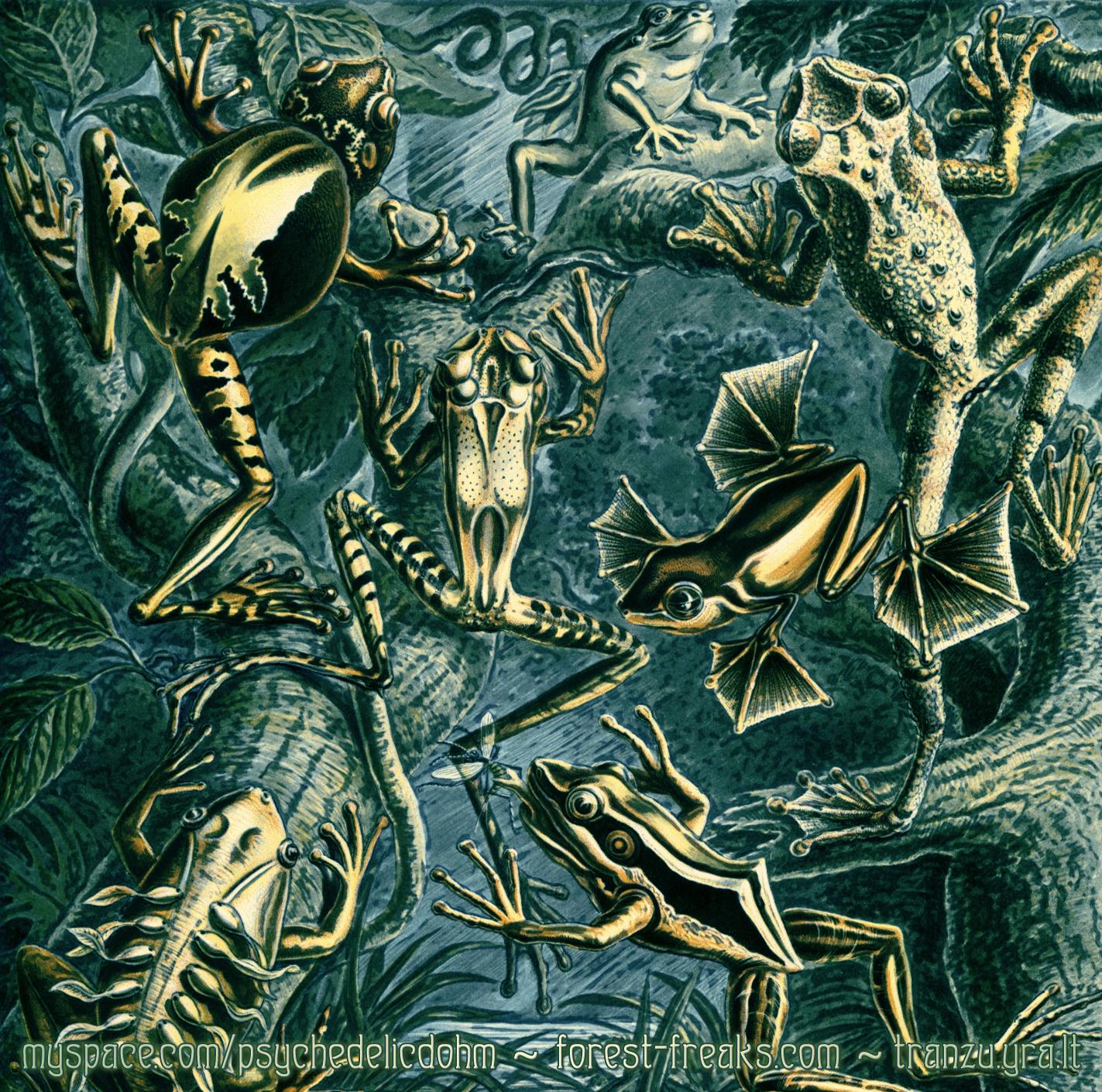 DoHm - Swampology - (Inside CD)