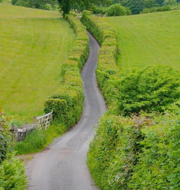 Country-Roads_18.jpg