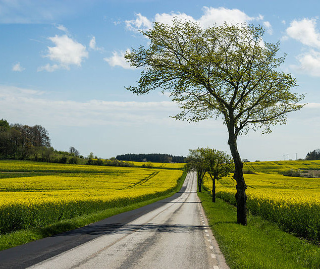 Country-Roads_15