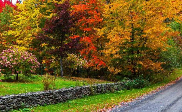 Country-Roads_11