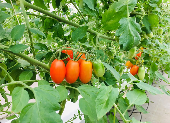 3kgトマト三品種詰め合わせセット