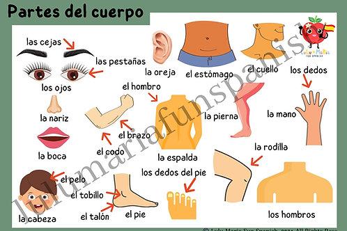 Partes del Cuerpo - Body Parts - Poster