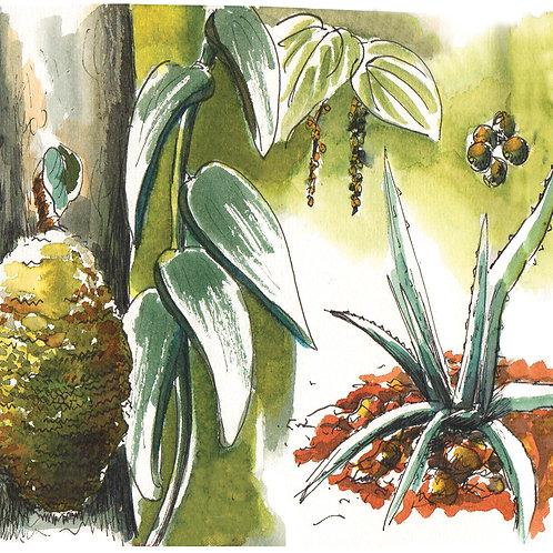 Carte postale Sri Lanka botanique 2