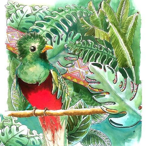 Carte postale tropicale quetzal