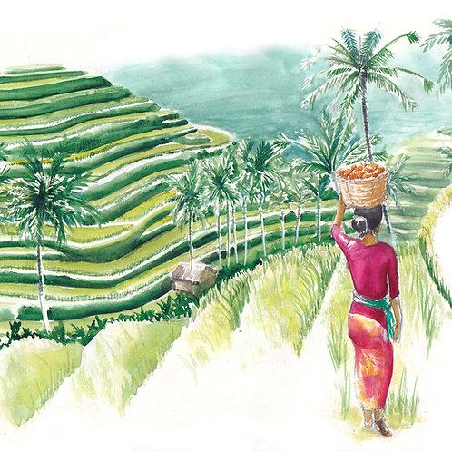 Carte rizières indonésiennes