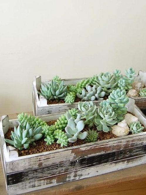 Cours en ligne Dessinez les plantes d'intérieur