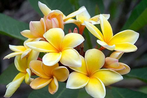 Cours en ligne Dessinez les Fleurs