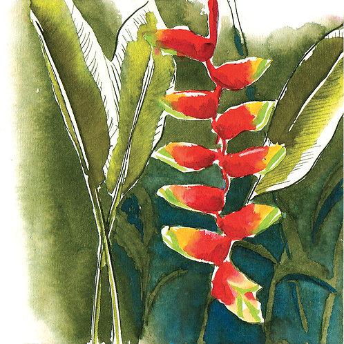 Carte postale Sri Lanka botanique 1