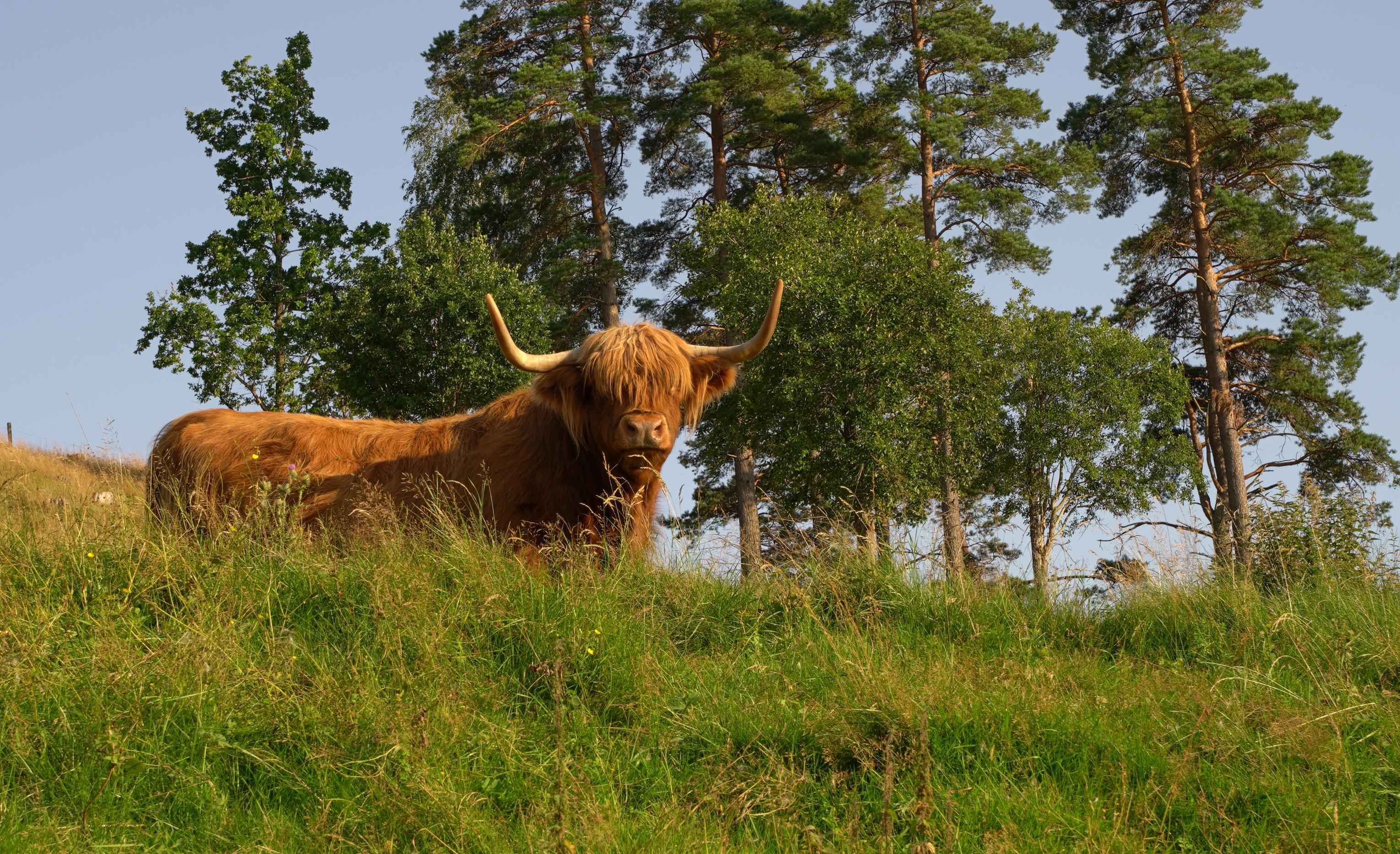 Schotse Hoogland