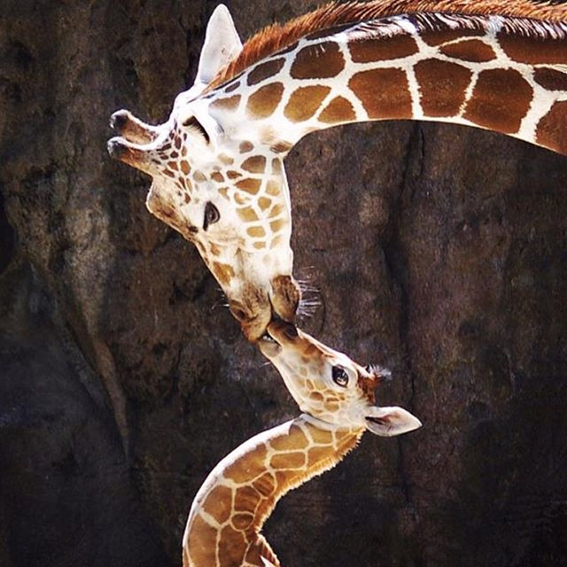 How Mammals Give Birth