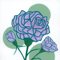 Lilac Carnations