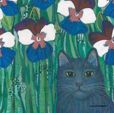 Kitten and Pansies