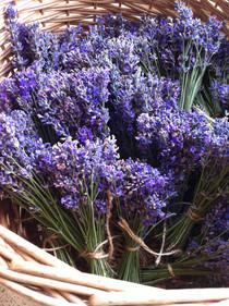 fresh lavender