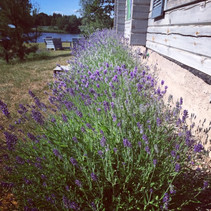 lavender village agrotourism
