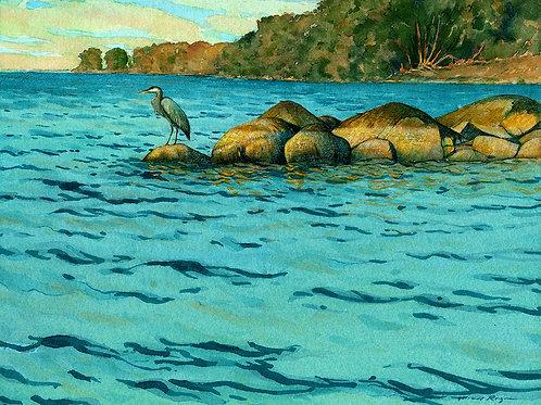 Heron at Carleton Island