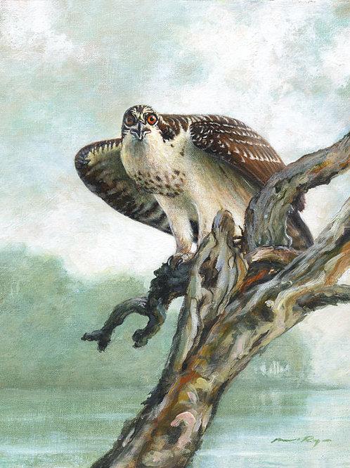 Osprey Territory