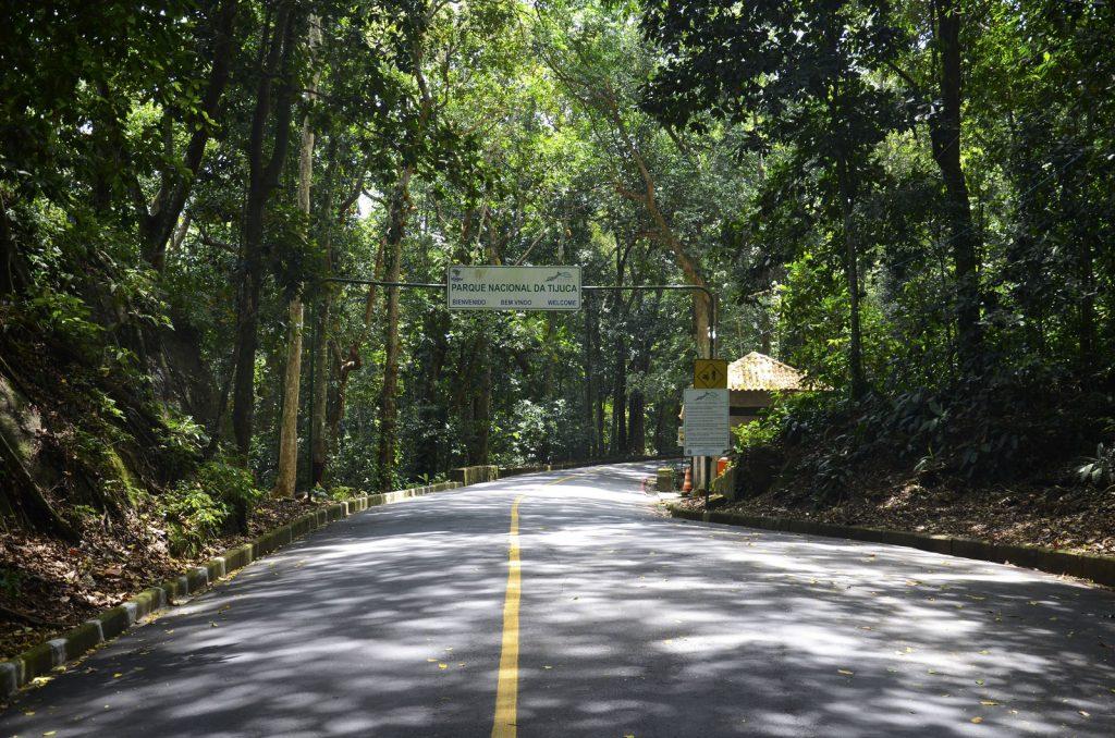 Floresta 3.jpg