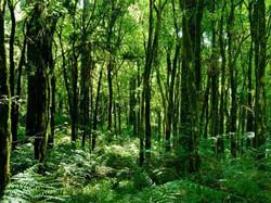 Floresta 5.jpg