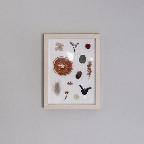 Dried Flower & Fruit Specimen Wooden Frame (S)