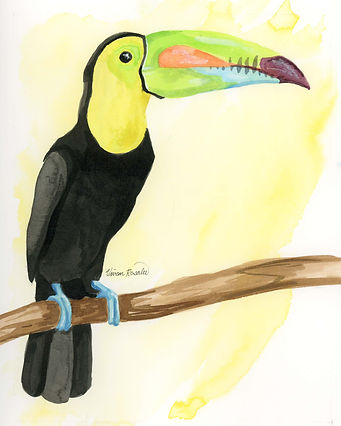 Toucan Ink Painting