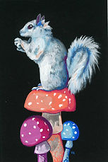White Squirrel on Mushrooms