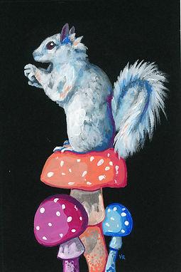 White Squirrel on Mushrooms