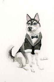 s husky in suit009.jpg