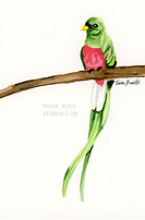 Quetzal Ink Painting