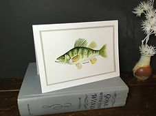 Yellow Perch original ink painting on a greeting card