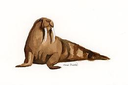 s walrus 4x6%22.jpg