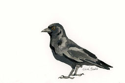 Crow Ink Painting