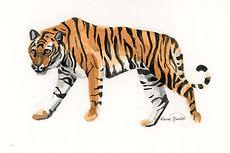 Ink Tiger