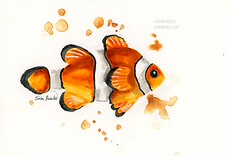 Clownfish Ink Painting