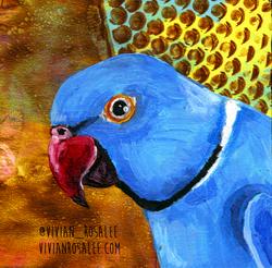 Blue Ringneck Parakeet