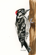 Downy Woodpecker Ink Painting