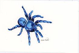 s tarantula003.jpg